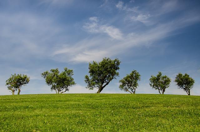 trees-790220_640
